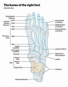 including the metatarsals