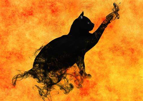 dzivei.lv - Kaķis ir īsts empāts, kurš spēj izdziedināt ...