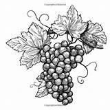 Vineyard Vins Videira sketch template