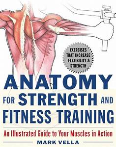 Anatomy For Strength And Fitness Training  An Illustrated