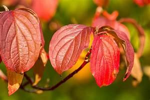 Rote Blätter Baum : kostenlose foto baum natur ast bl hen blatt blume ~ Michelbontemps.com Haus und Dekorationen