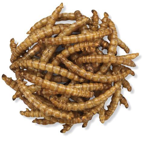 duncraft com duncraft roasted mealworms 5600