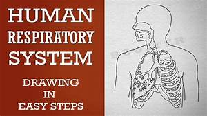 Respiratory System Diagram For Kids Worksheet