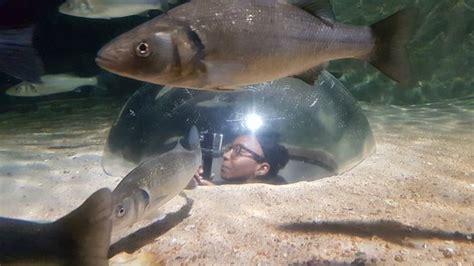aquarium cotes d armor aquarium marin de tregastel tr 233 gastel ce qu il faut savoir pour votre visite tripadvisor