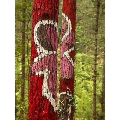 24-IBARROLA-En rosa y rojo - In rose & redPainted