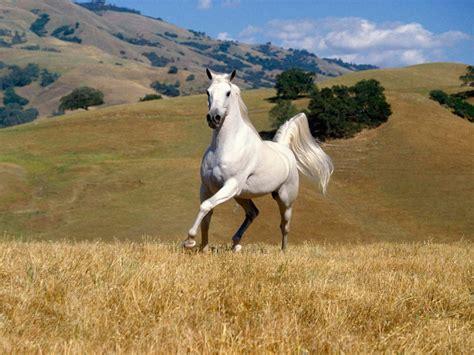 Horse Animal 2013 High Resolution Hd
