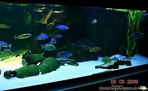 L Form Aquarium : aquarien und terrarien indiv gestalten aquariumbau ennigerloh aquarien und terrarien ~ Sanjose-hotels-ca.com Haus und Dekorationen