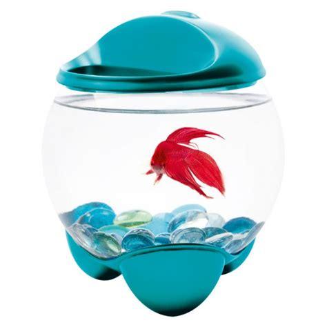 aquarium tetra betta turquoise pour poisson combattant