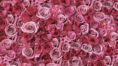 Rose Gold Wallpapers Background Backgrounds Roses Desktop