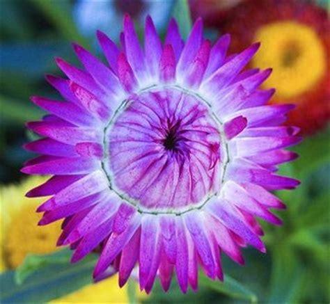 large purple flowers large purple flower photo jpg