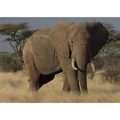 Learn about Elephants – Enjoy these free learning resources!