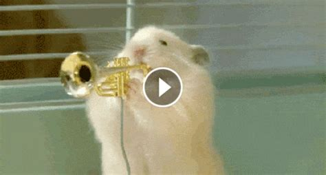 animated gifs  hamster plays instruments