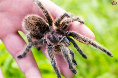 5 Exotic Animals That Make Great Fascinating Pets Pets4Homes