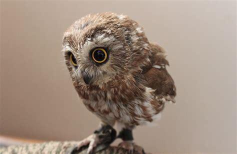 good owl names usedwigs