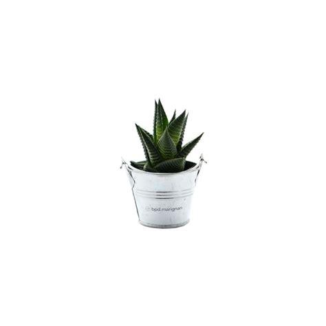 plante de bureau plante publicitaire mini plante dépolluante de bureau