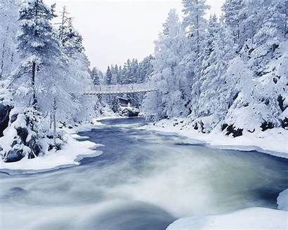 Winter Forest Wallpapers Desktop Zastavki 1024 1280