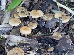 Pilze Im Garten Entfernen : schon wieder pilze pflanzenbestimmung pflanzensuche ~ Lizthompson.info Haus und Dekorationen