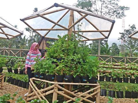 taman sayur  kendal  bahan pangan berpadu