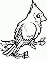 Cardinal Bird Coloring Cardinals Pages Draw Printable Drawing Easy Line Clip St Louis Birds Football Louisville Getdrawings Simple Getcolorings Button sketch template