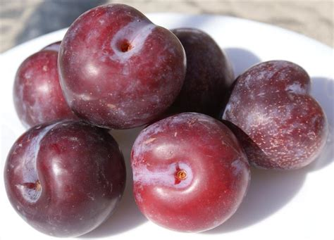small purple plum plum tree species an overview