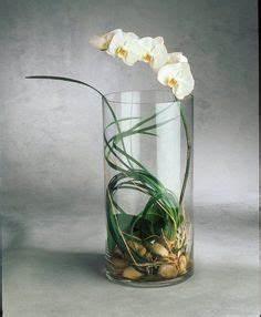 Orchideen Im Glas : die 34 besten bilder von orchideen im glas orchideen im ~ A.2002-acura-tl-radio.info Haus und Dekorationen