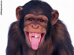 27  List Different Types Of Monkeys Facts And Information