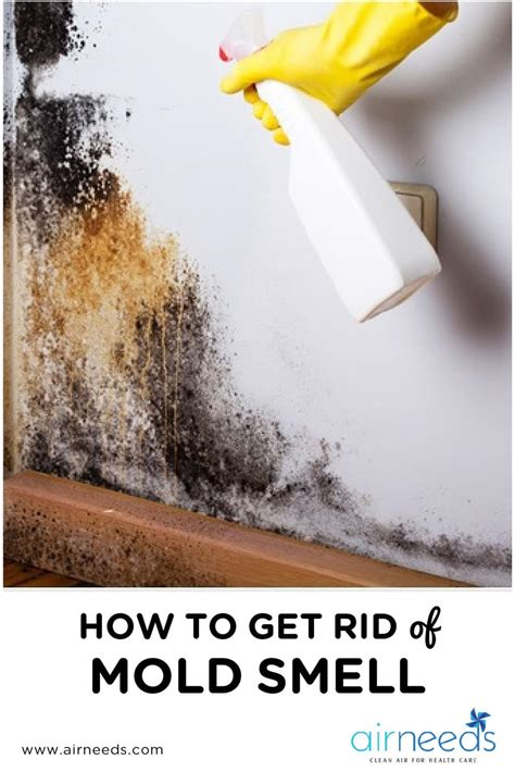 tips     rid  mold smell   house airneeds