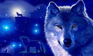 galaxy wallpaper wolf – Best Wallpaper Download