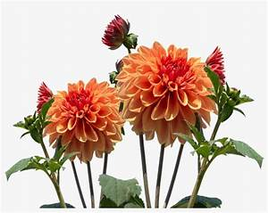 Real Flowers Png Download - Autumn Flower Transparent ...