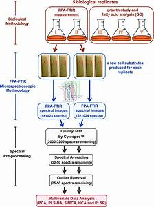 Ftir Microspectroscopy For Rapid Screening And Monitoring Of Polyunsaturated Fatty Acid
