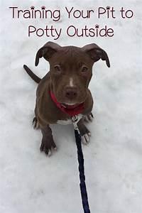 best 25 pitbull training ideas on pinterest pitbull dog With train dog to potty outside