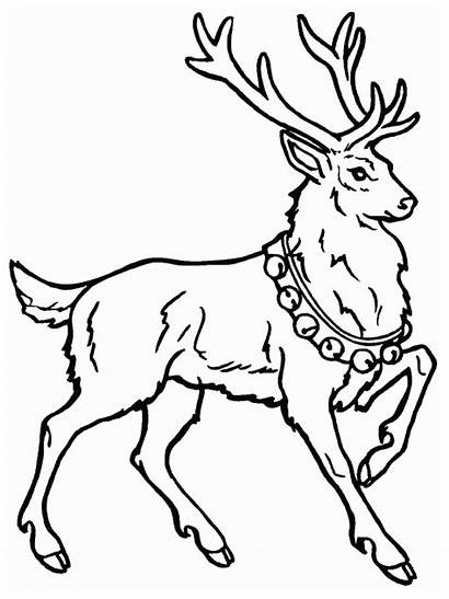 Deer Coloring Pages Christmas Coloringpages1001 Reindeer Colored