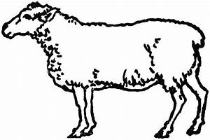Black And White Sheep Clipart - Clipart Suggest