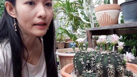 Cactusวิธีง่ายๆเลี้ยงแคคตัสให้รอดตายและดอกดก - YouTube