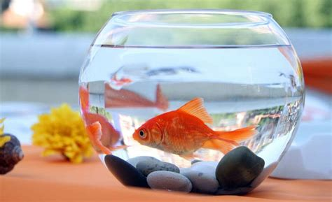 home  nourishing feed  aquarium fish aquarium