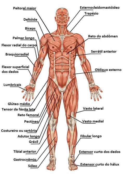 imagens  corpo humano  ajuda  estudo fichas