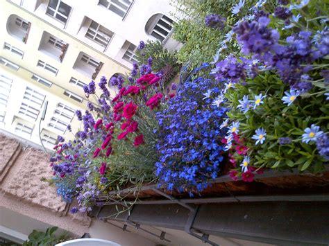 fiori da mettere sul balcone fiori da balcone pieno sole con 10 fiori e piante da