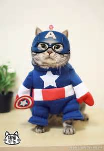 captain cats cat will save your day today with smiles