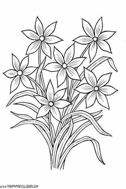 Flores Dibujos Pintar