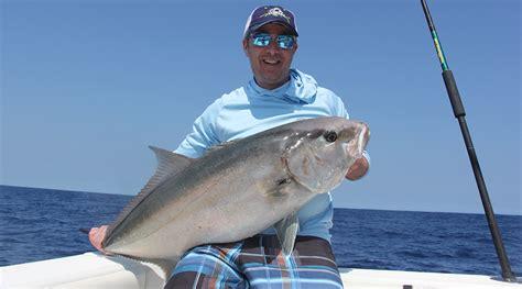 amberjack tips fishtrack fishing reef