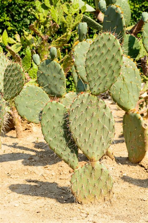 Benefits Of Drought Tolerant Plants  Using Drought