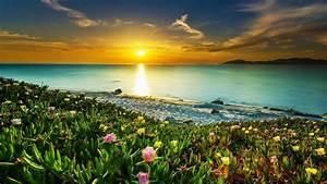 Sea Coast Meadow With Tropical Flowers Sandy Beach Calm ...