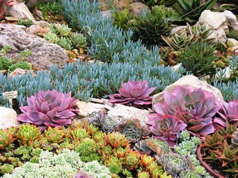 succulent garden bed start a desert garden with succulent daily easy inspiration for backyard project holicoffee