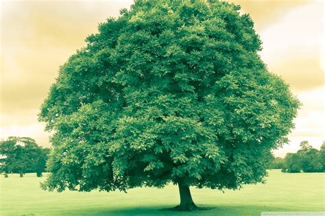 photo green tree tree plants nature