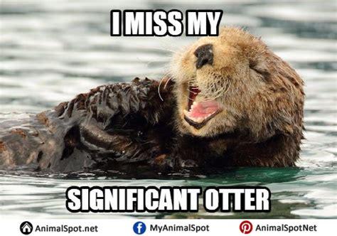 Sea Otter Meme - sea otter meme 100 images sea otter meme by artbyjoelk on deviantart otter memes drumming
