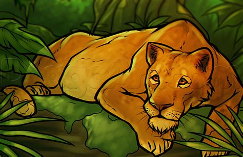 draw  lioness step  step safari animals