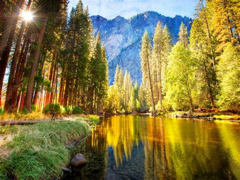 nature mountainous river bank  pine trees  green