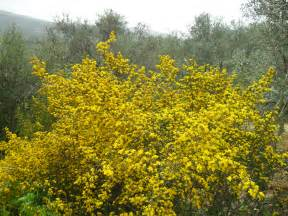 bush yellow flowers in blooming spring fragole e farfalle