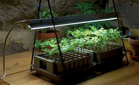 fluorescent lights for growing plants 10 easy pieces grow lights for indoor plants gardenista