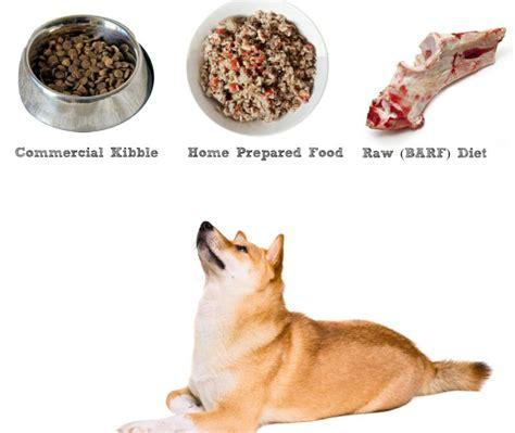 dog food  shiba inus   shiba inu